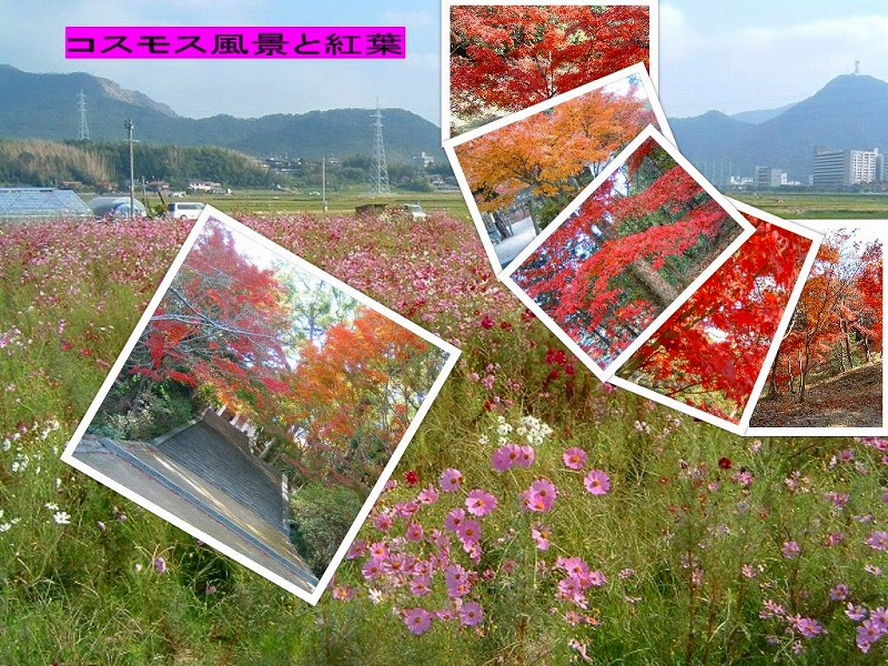 Collage20141024_3